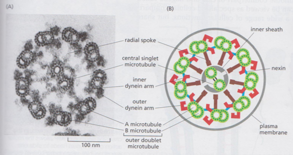 Figure 1 - taken from reference 4