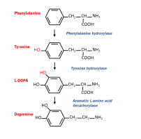 Figure 3. Synthesis of dopamine with the use of various genetically encoded enzymes. Note the presence of L-DOPA which can be administered to treat Parkinsons.
