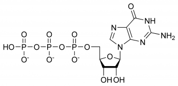Displayed formula of guanosine triphosphate showing the three regions of the molecule: the guanine base, ribose sugar and the triphosphate arm.