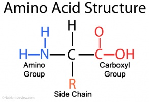 Amino acids - The School of Biomedical Sciences Wiki