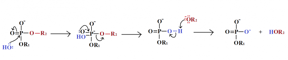 Phosphodiester hydrolysis mechanism.png